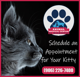 Feline Friendly Appointments Available
